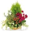 Vign_composition_de_plantes_deuil