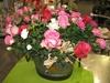Vign_fleurs_mag_001