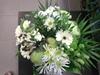 Vign_fleurs_mag_017